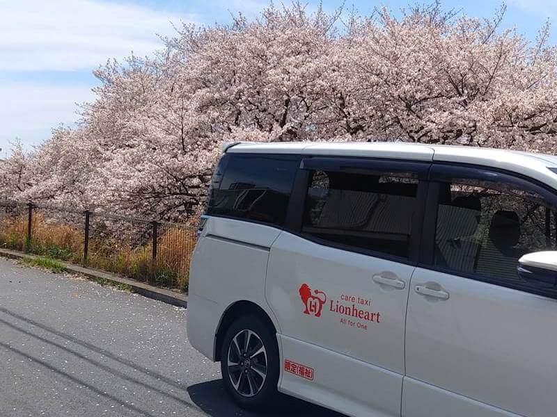 桜の木とヴォクシー