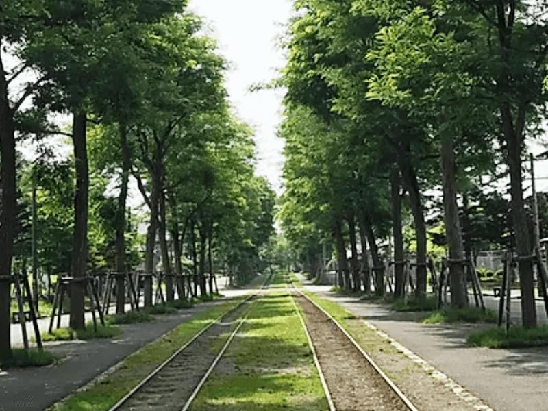 印西市の並木