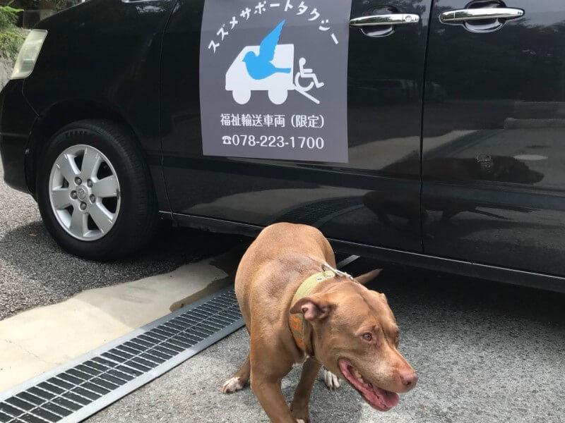 車体ロゴと看板犬